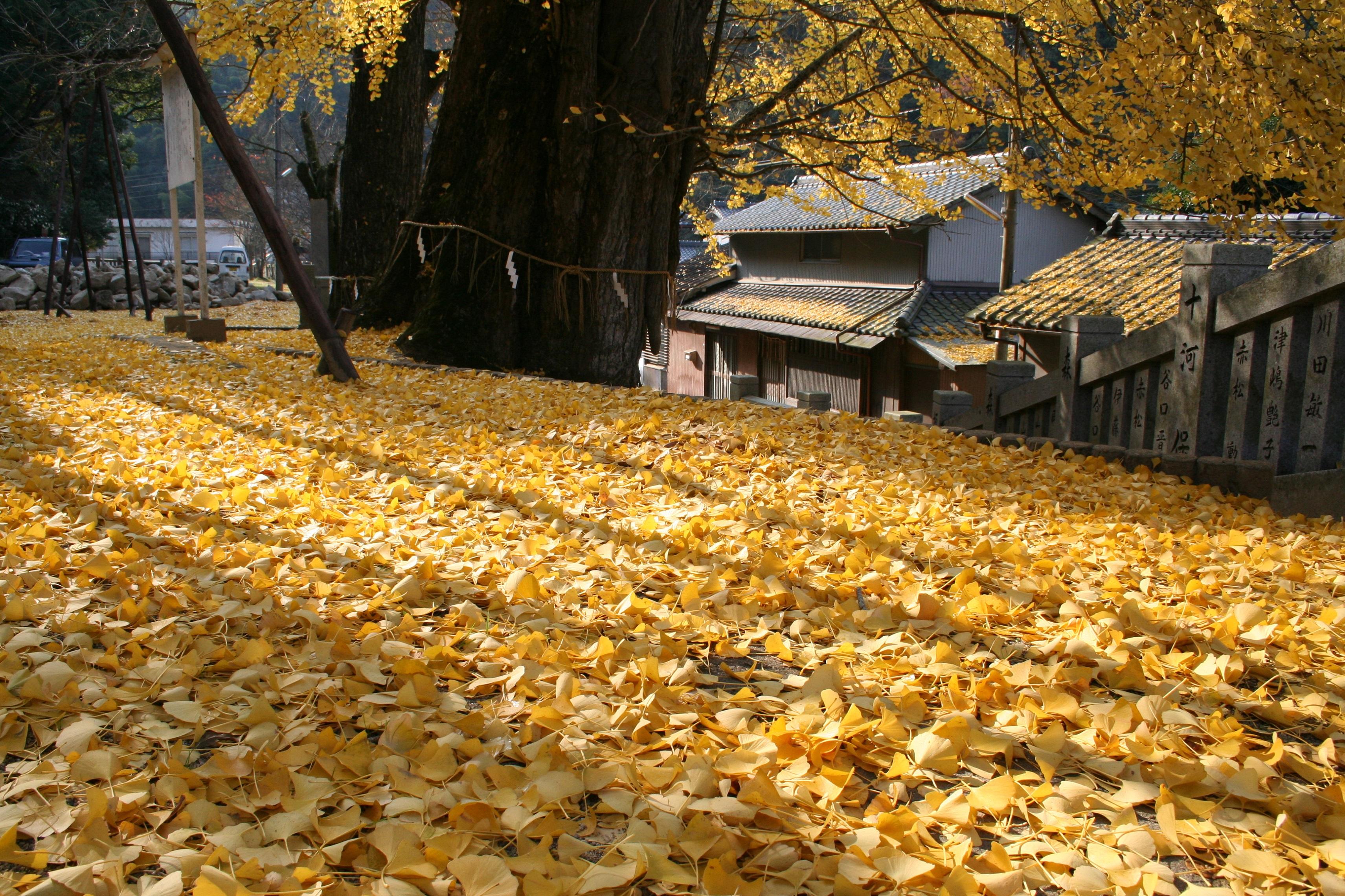 kensyuu20081210-011