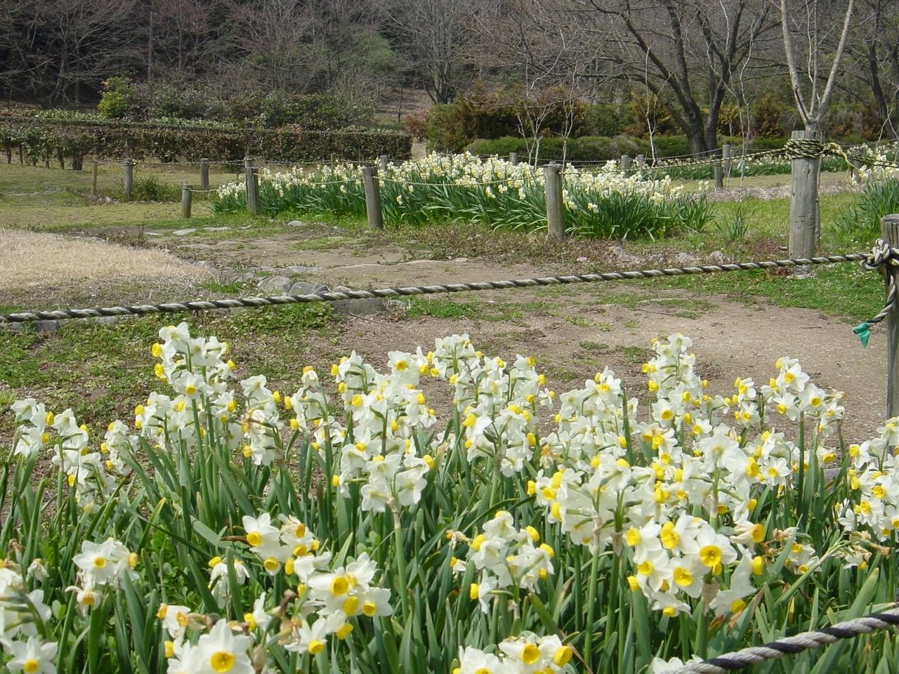 2004.2.24花の追加 005